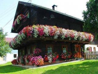 Casa cu fatada plina de petunii curgatoare