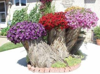 Petunii plantate intr-un trunchi vechi de copac