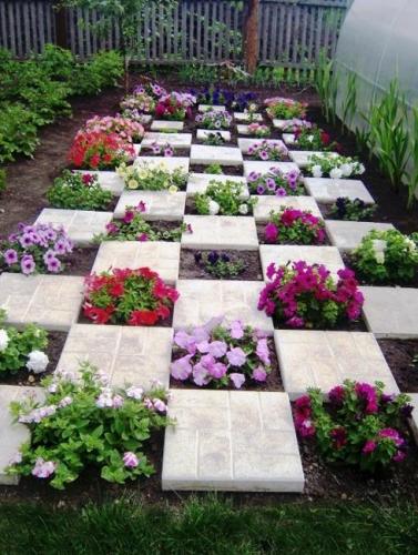 Petunii plantate printre dalele de gradina