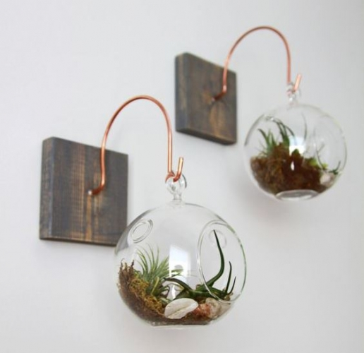 Plante care cresc fara pamant - plantele aerofite adevarate minuni naturale