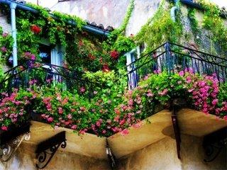 Balcon cu gradina cu flori multicolore si plante decorative verzi