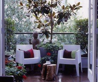 Copacel crescut in ghiveci pe balcon