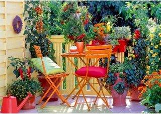 Gradina pe balcon cu flori si legume