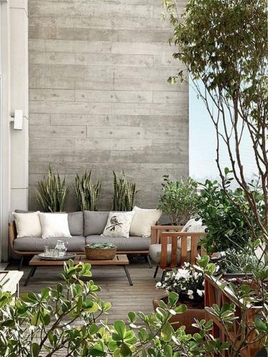 Plante de balcon iubitoare de soare si caldura