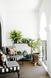 Plante decorative pentru balcon