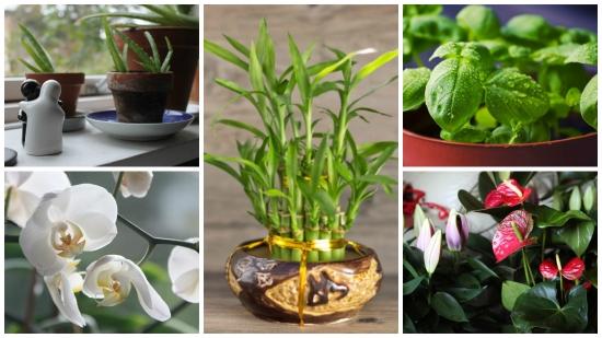 Plante care te binedispun