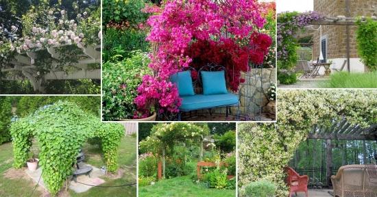 Cele mai bune plante cataratoare pentru pergole