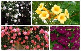 Flori cataratoare pentru gradini frumoase