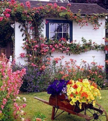 Idee urcare trandafiri pe fatada casei