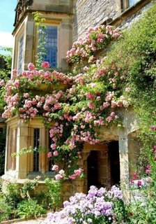 Intrare imbracata in trandafiri cataratori soi parade roz
