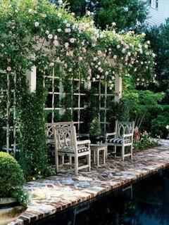 Terasa imbraca in trandafiri albi
