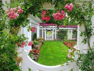 Trandafiri cataratori pe gard alb