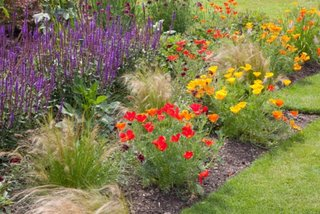 Flori pentru soluri care mentin apa