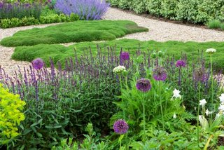 Gradina cu salvie si alte plante pentru soluri cu umiditate