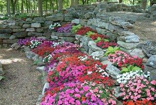 Idei de flori pentru soluri pietroase si rocarii
