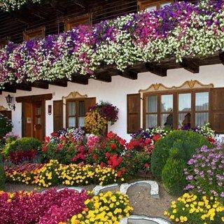 Idee decorare fatada casa cu flori colorate de vara
