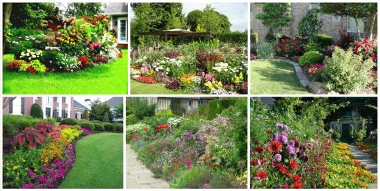Plante perene de vara cu flori colorate pentru gradini