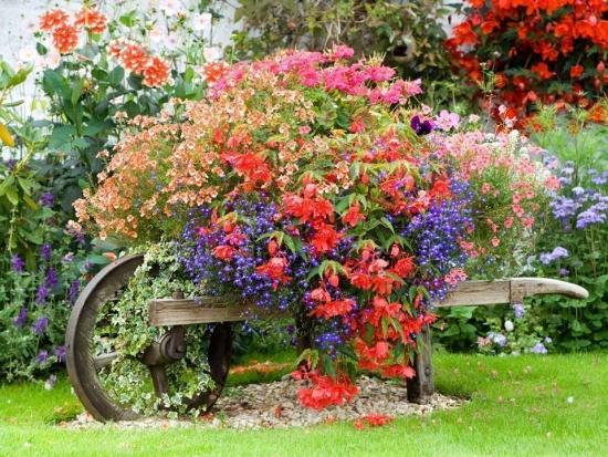 Roaba decorativa de gradina cu flori colorate de vara