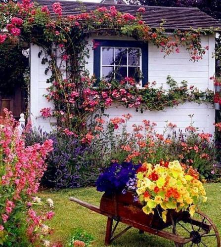 Trandafiri cataratori roz