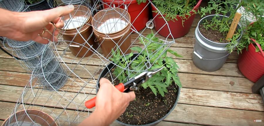 Cum construim un spalier circular din plasa de sarma pentru palisarea legumelor din ghivece - Proiect DIY