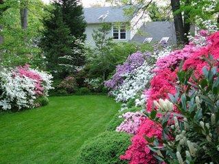 Arbusti cu flori tufe azalee de gradina
