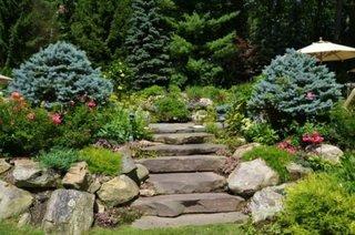 Flori si plante pentru gradina la munte