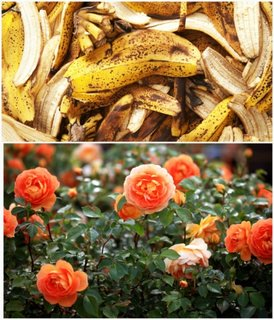 Ingrasamant din coaje de banane