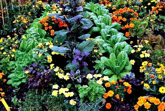 Protejarea legumelor si florilor