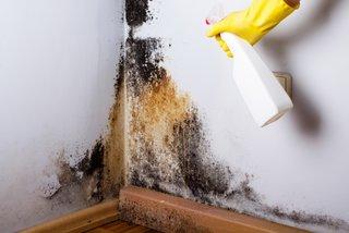 Eliminare mucegai din casa