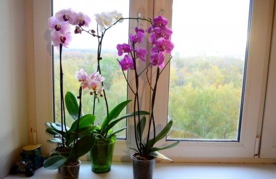 Ghivece cu orhidee inflorite