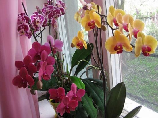 Orhidee colorate diferit
