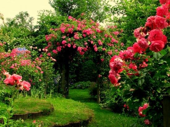 Trandafiri agatatori
