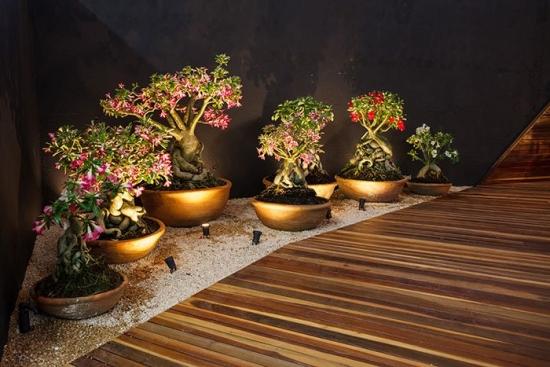 Decor terasa cu vase cu trandafirul desertului