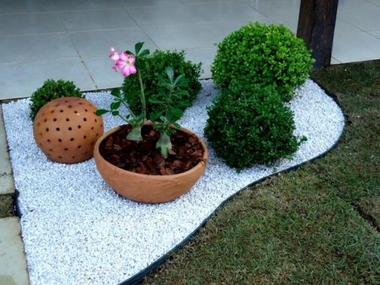 Mic bonsai trandafirul desertului