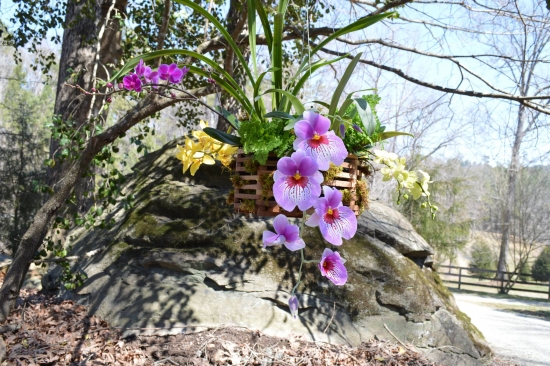 Transplantarea orhideelor - cum se realizeaza corect aceasta operatiune delicata