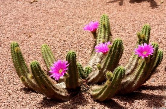 Bolile si daunatorii cactusilor - sfaturi tratamente si combatere