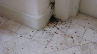 Cum scapi de insectele din casa