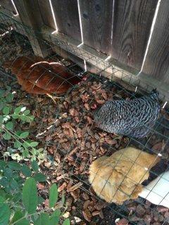 Idee protejare pasari curte de pradatori