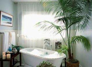 Baie decorata cu palmier natural